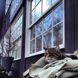 デンマークで出会った猫