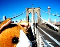旅について(4)・・・「旅」に行く前を楽しめ!